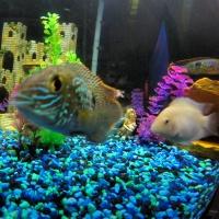 Fish Tank Fun During #SharkWeek
