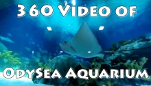 OdySea Aquarium in VR (360 Video)